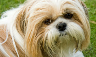 Best Muzzle for Shih Tzu Reviews