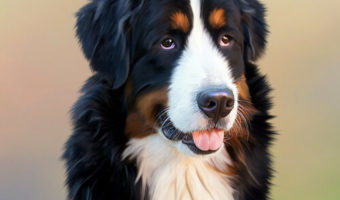 Best Toys for Bernese Mountain-Dog Reviews