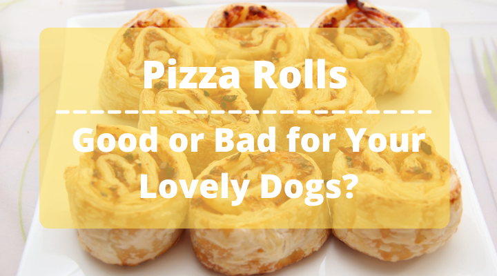 can dogs eat pizza rolls, can dogs have pizza rolls, is it ok for dogs to eat pizza rolls, can you give dogs pizza rolls, can my dog eat pizza rolls, can i give my dog pizza rolls, are pizza rolls safe for dogs, are pizza rolls bad for dogs