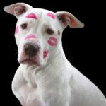 best dog brush for Pitbulls