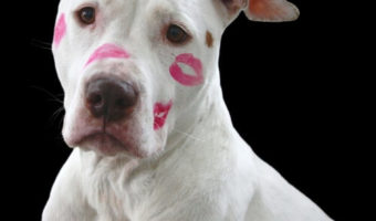 best dog brush for Pitbulls