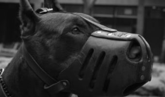 best muzzle for Doberman, best muzzle for dobermans, best muzzle for a doberman, best dog muzzle for doberman, best doberman muzzle, baskerville ultra muzzle, baskerville muzzle size 4, baskerville muzzle size 5, baskerville muzzle size 3
