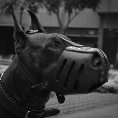 best muzzle for Doberman, best muzzle for dobermans, best muzzle for a doberman, best dog muzzle for doberman, best doberman muzzle, baskerville ultra muzzle, baskerville muzzle size 4, baskerville muzzle size 5, baskerville muzzle size 3