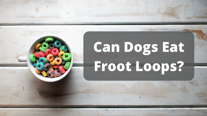 Can Dogs Eat Froot Loops