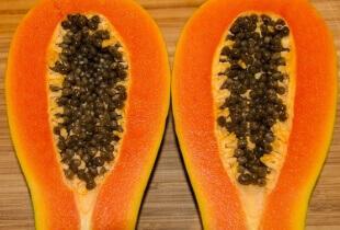can Shih Tzu eat papaya, can dogs eat papaya skin, can dogs eat papaya peel, can my shih tzu eat papaya, can shih tzu dogs eat papaya, papaya for shih tzu, is papaya good for shih tzu, is papaya safe for shih tzu, is papaya bad for shih tzu
