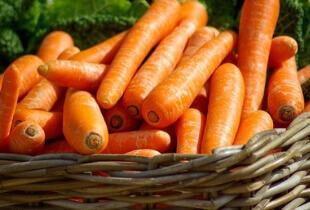 can Shih Tzu eat carrots