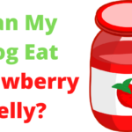 can dogs have strawberry jelly, can dogs eat strawberry jelly, can you give dogs strawberry jelly, is strawberry jelly ok for dogs, is strawberry jelly bad for dogs, is strawberry jelly safe for dogs, can my dog eat strawberry jelly